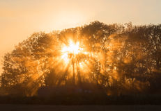 Beams of morning sun filtering Royalty Free Stock Photography