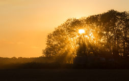 Beams of morning sun filtering Royalty Free Stock Images
