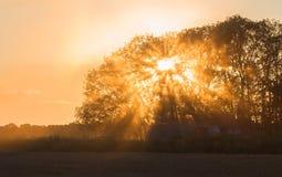 Beams of morning sun filtering Stock Photo