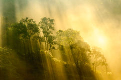 Beams of morning sun filtering through the tree and fog. Stock Photos