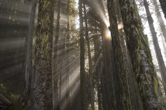 Beams. Rays beam through the clouds at 4000 feet along the Liumchen Lake Trail, Fraser Valley,BC, Canada Stock Images