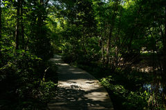 Beams of summer afternoon sunlight cast on planked path in woods Stock Image
