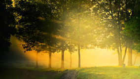Beams of the sun through foliage of trees in fog Royalty Free Stock Photography