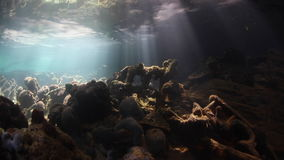 Beams of Sunlight Underwater in Palau`s Lagoon stock video