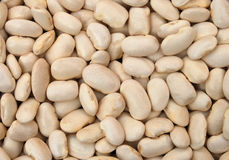 Bean 01. White bean in close up Royalty Free Stock Images