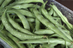 Bean. Pods Stock Images