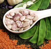 Bean. Phaseolus vulgaris pods and seeds in the kitchen ready for cook Stock Images