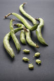 Bean. Fresh green bean with gray background Royalty Free Stock Image