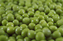 Bean. A green bean close-up royalty free stock images