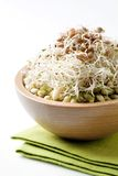 Bean And Lentil Sprouts Royalty Free Stock Photography
