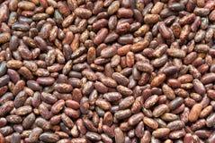 Free Bean Background Stock Photo - 15943580