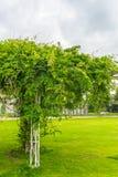 Bean-Baumanlage im Park Lizenzfreie Stockfotos