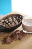 Bean of cocoa. Different forms of cocoa and chocolate Royalty Free Stock Photos