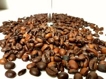 Bean coffeebeans whitebackground brownbeans Stock Images