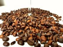 Bean coffeebeans whitebackground brownbeans. Brown brownbean white background glass Stock Images