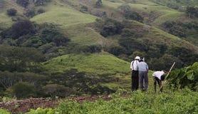 Bean Farmers on a Hillside. Stock Photos