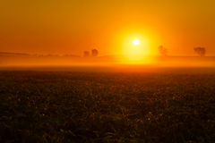 Bean Field Foggy Sunrise Immagini Stock