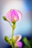Bean Flower Stock Photo