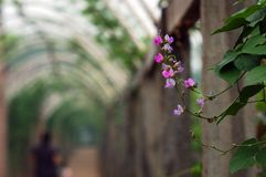 Bean flowers stock image