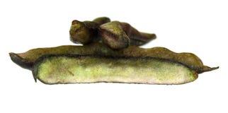 Bean. Fresh bean on white background Stock Photography