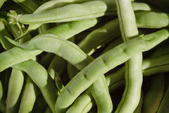 Bean Greens. Freshly picked green beans from the garden Stock Photo