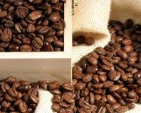 Bean morning Royalty Free Stock Image