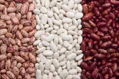 bean nerki rodzaju 3 Obraz Royalty Free