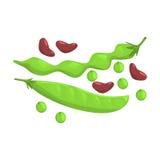 Bean And Peas Pods vert, produit alimentaire Rich In Proteins, élément important de l'illustration saine de vecteur d'alimentatio Photos stock