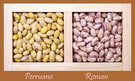 Bean Royalty Free Stock Image