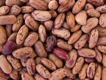 Bean Pinto. Photo of close-up of bean Pinto Stock Photography