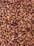 Bean Pinto. Photo of close-up of bean Pinto Royalty Free Stock Photos