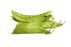 Bean Plant Imagen de archivo libre de regalías