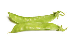 Bean plant Stock Image