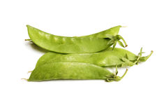 Bean plant Royalty Free Stock Image
