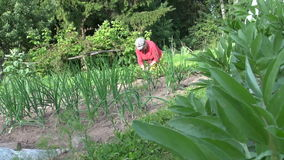 Bean plant leaves and gardener old woman weed plants in garden stock video