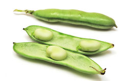 Bean pods Royalty Free Stock Photo