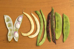 Bean pods of different types Stock Photography