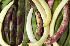Bean pods of different types and colors Royalty Free Stock Photo