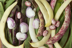 Bean pods of different types and colors Stock Photo