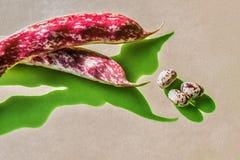 Bean pods and fruit Stock Photos