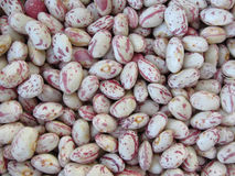 Bean rounded with red specks texture background. The beans are cultivated with biological agriculture in Tuscany, Italy Royalty Free Stock Photos