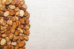 Bean-Samen werden auf einem hellen Leinengewebe ausgebreitet Hintergrund Der Platz für zeichnenden Text lizenzfreie stockfotografie