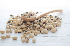 Bean seed. Ingredient : Bean seed on wood background Stock Photography