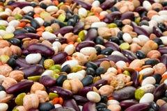 Bean seed mix Royalty Free Stock Photo