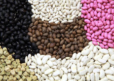 Bean seeds Stock Image