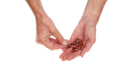 Bean seeds in hand Royalty Free Stock Photography