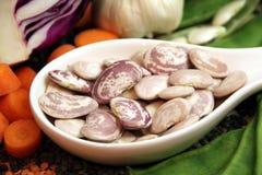 Bean seeds Royalty Free Stock Image