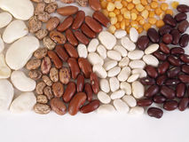 Bean Soup Ingredients, text. A colorful assortment of various dry beans over a white background with room for text along the bottom Royalty Free Stock Photo