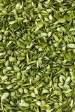 Bean sprout. In the vegetable market Stock Photos
