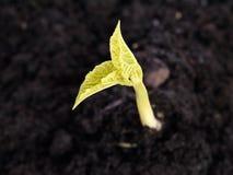 Bean sprout Royalty Free Stock Photos